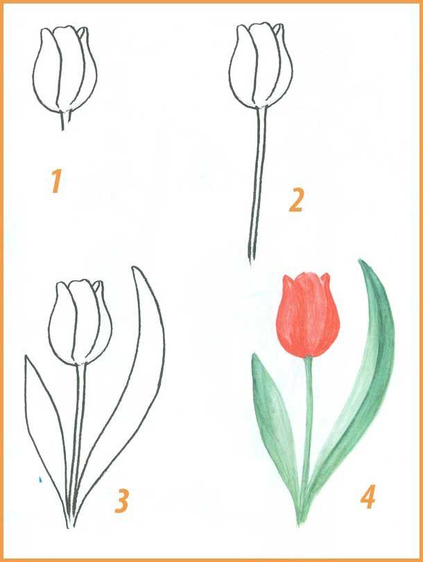 Поэтапное рисование цветов 6
