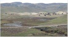 La faune des îles: Une Halte sur les îles Islay et Jura, les perles des Hébrides.  Rich wildlife : A Break on Islay and Jura, pearls of the Hebrides. #PlumeVoyageMagazine #Luxury #Travel #Magazine #TravelNews #BrevesdeVoyage #AuCoursduChemin #LuxeDiscret #SimpleLuxury #Story #WanderAround #Islay #Jura #ArchipelDesHébrides #Nature #Paysages #Landscape #TheWoollenMill #JuraLodge #Ecosse