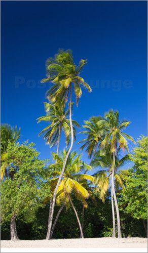 Coconut Palms on Tropical Island, Travel Photography Prints by cinema4design.