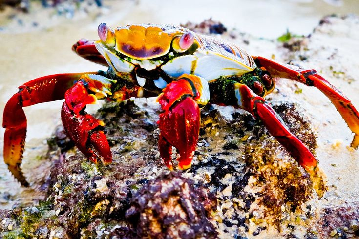 Reisfotografie natuurfotografie krab Galapagos Ecuador. Foto door Marijke Krekels fotografie