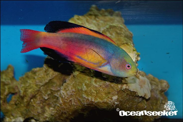 Rare fish species rare fish in south africa marine for Exotic saltwater fish