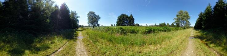 Dieses Panorama zeigt ein Feld mit Farnkraut am Waldrand im Naturschutzgebiet Struffelt-Heide in Roetgen / Rott nähe Aachen in Deutschland. Der Naturpark gehört zum sogennannten Vennvorland im Naturpark Hohes Venn Eifel. Die Wege durch die Heide bzw. das Hochmoor führen teilweise über Holzstege und laden zu jeder Jahreszeit zum Wandern ein.