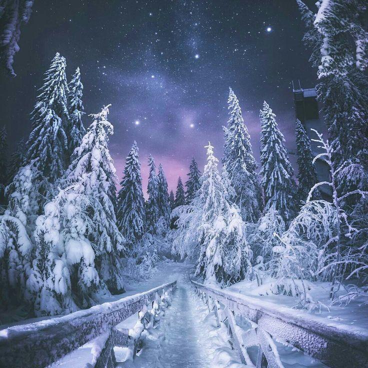 Зимний лес ночью картинки на телефон