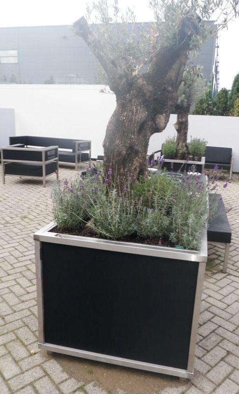 Plantenbak rvs met zwart gestoffeerde zijpanelen. Mooi met een olijfboom.