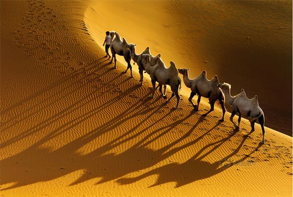 #LuxuryTripMorocco gives delightful experience and their unique cultures, morocco cities and desert tours. Come and enjoy the trip. Find out more @ http://www.camelsafaries.net/morocco-tours.html
