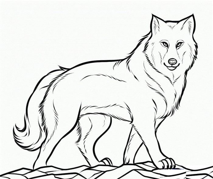 Detailed Wolf Coloring Pages Wolf Colors Animal Coloring Pages Wolf Drawing