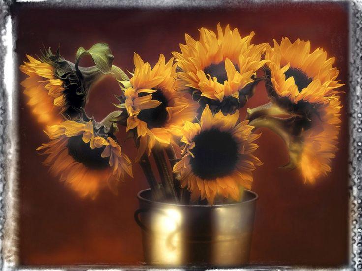 desktop bakgrunner - Vakre blomster: http://wallpapic-no.com/hoy-opplosning/vakre-blomster/wallpaper-8715