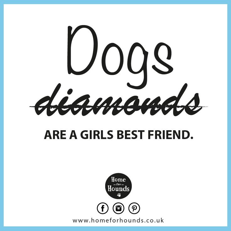 Dogs are a girls best friend!  #‎homeforhounds #‎dogdaycare #‎quoteoftheday #‎inspiration #‎doglove #‎loveyourpets #‎bestfriends