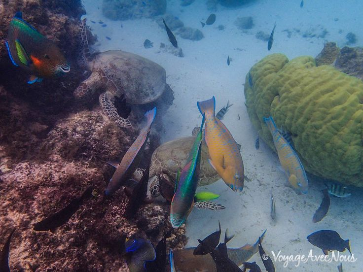 Ningaloo-reef-australie