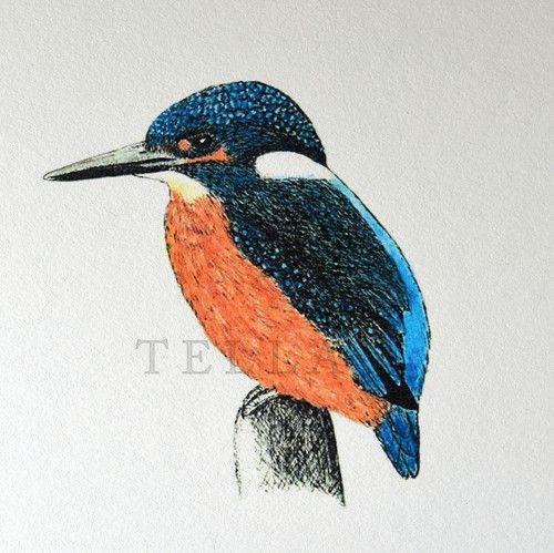Kingfisher - Ledňáček v barvách