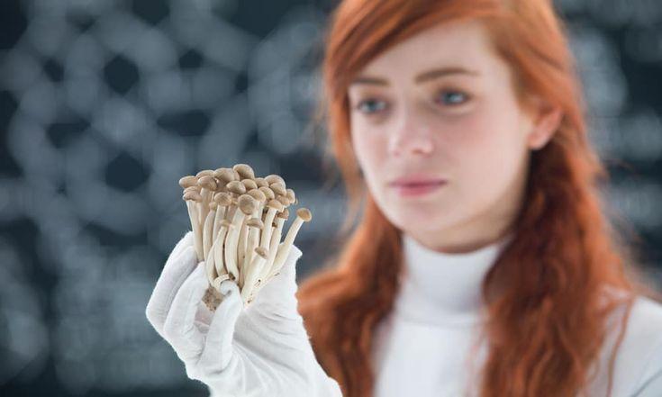 Can Magic Mushrooms Change Political Views?