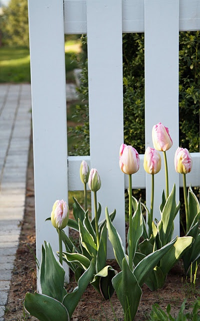 Idea for entrance to front yard..