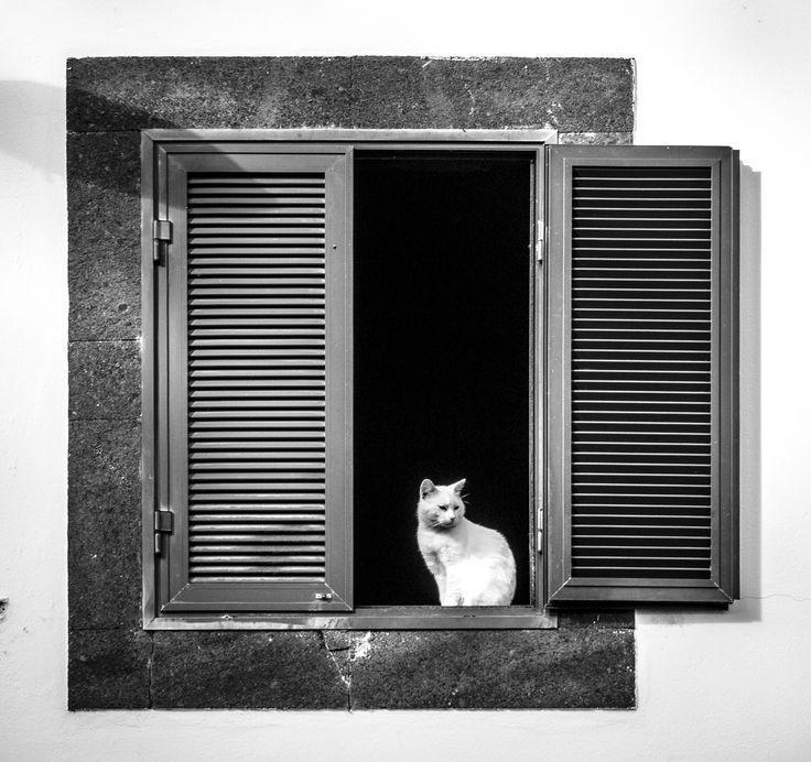 Cat in a widow by Nigel Lomas on 500px