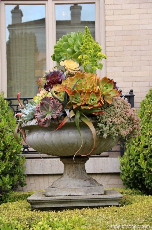 Succulents in an urn by Living Green. San Francisco Decorator Showcase.