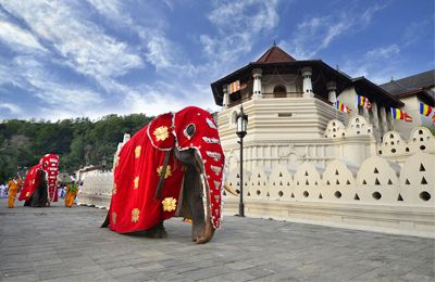 We offer Colombo Sri Lanka Tours, Pinnawala Kandy Sri Lanka Tourism, Nuwara Eliya Sri Lanka Tourism, Sri Lanka Tour Packages, Sri Lanka Holiday Packages, Sri Lanka Vacation Packages, Sri Lanka Travel Packages, Sri Lanka Tourism Packages at competitive rates.
