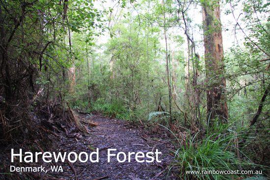 Harewood Forest Walking through the Karri Forest Denmark, Western Australia