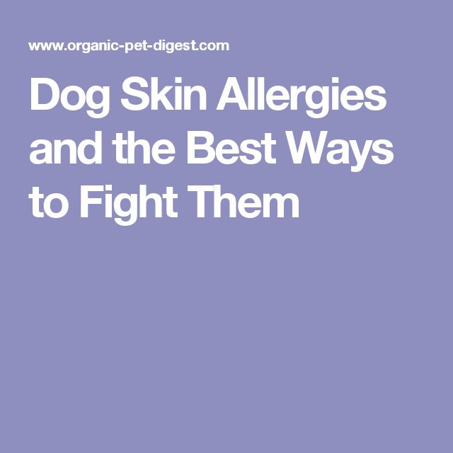 Dog Skin Allergies and the Best Ways to Fight Them