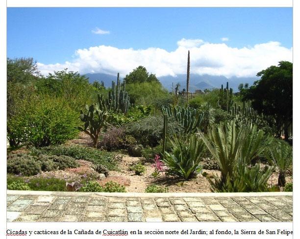 Jardin etnobotanico oaxaca mexico m xican culture for Jardin oaxaca