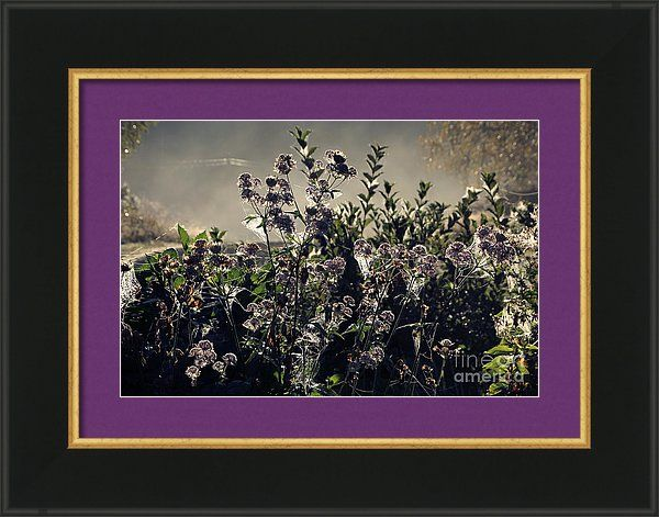 Morning Dew Framed Print featuring the photograph Morning Dew Backlight by Sverre Andreas Fekjan