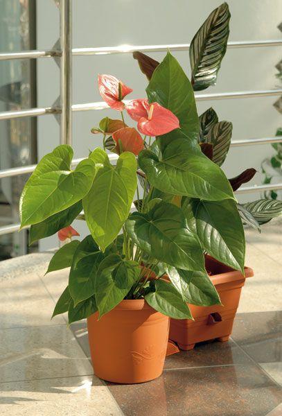 Naordinujte si šesť rastlín do obývačky 2
