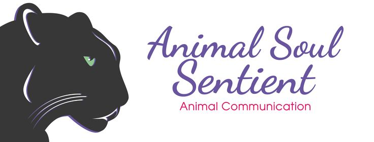 Have you ever wondered what messages your animals have to share with you?  www.animalsoulsentient.com