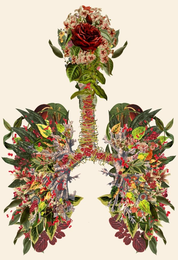 Just Breathe Remix - Anatomical collage art by bedelgeuse Art Print