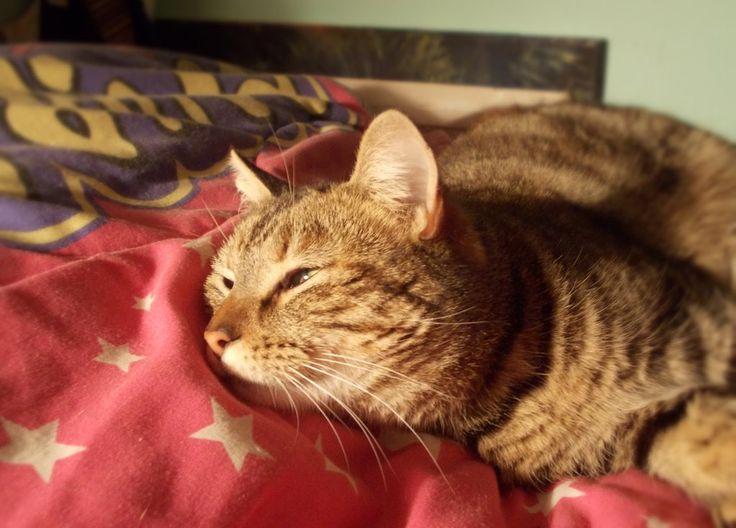 Romanita, my cat by Sunao17