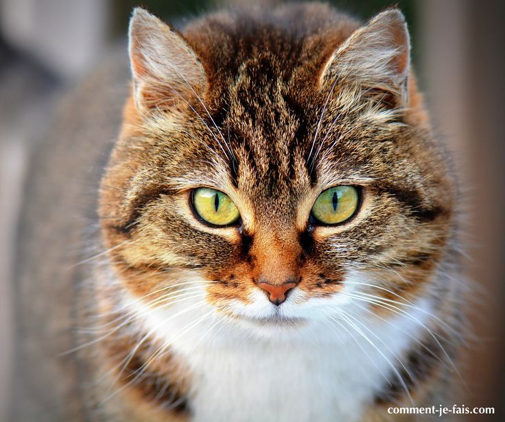 C'est la même chose pour tous ceux qui ont un jour adopté un chaton : nettoyer le pipi de chat et réussir à faire disparaître l'odeur désagréable dont les chats ont le secret est un véritable parcours du combattant. Car les chats ont cette particularité : ils aiment revenir uriner aux endroits qu'ils ont déjà …
