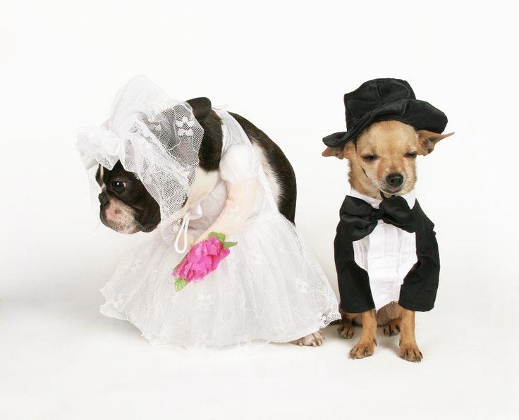 Dog Wedding Outfits UK