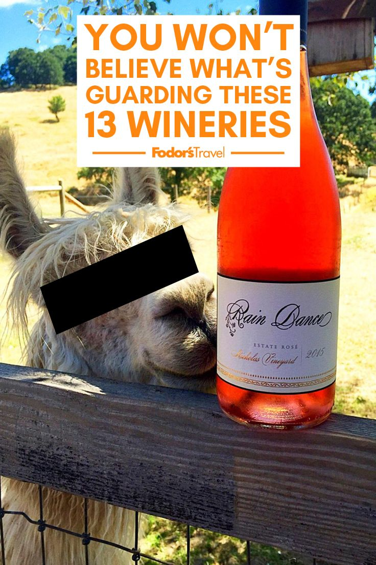 You Won T Believe What S Guarding These 13 Wineries Wine Tasting Course Wine Bottle Winery