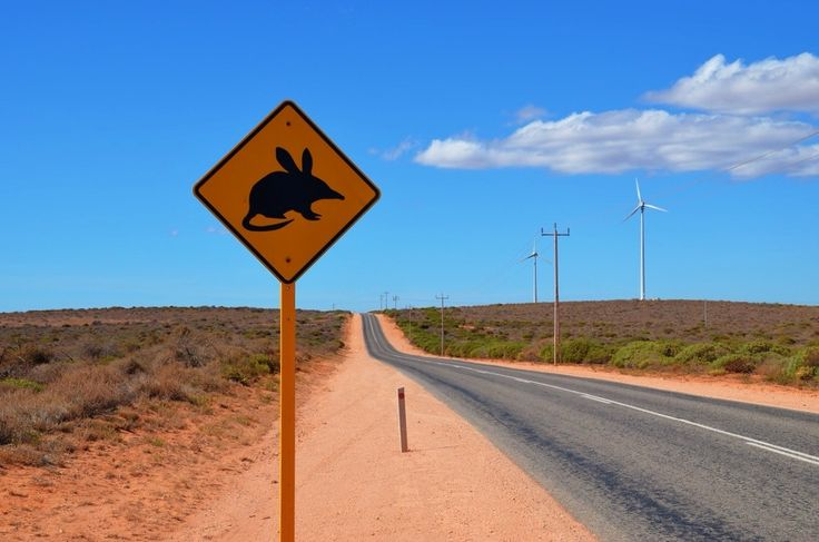 31 Weird Facts About Australia That Will Amaze You