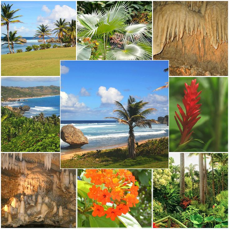 Best Barbados Attractions Book Your Tours Activities Images - Barbados tours