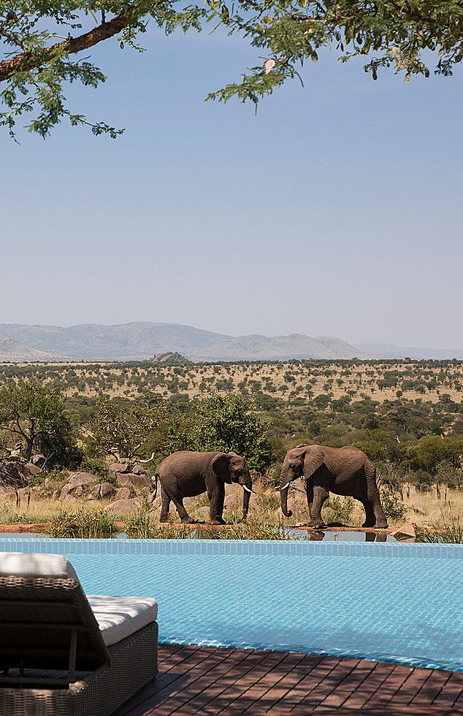 Deep within Africa's finest game reserve, our Safari Lodge welcomes you to a sanctuary of Four Seasons comfort. Lounge by the pool and watch elephants stroll by - out of this world! Timbuktu Travel.