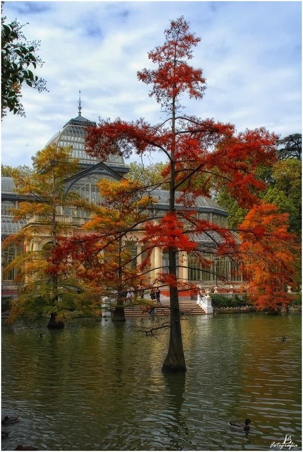 El Palacio de Cristal en el Parque de el Retiro visto desde fuera en Otoño. Autumn in Madrid , Spain