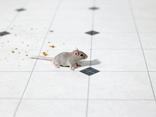 How To Stop Mice In Kitchen Cabinets Hunker Mice Repellent Getting Rid Of Mice Keep Mice Away