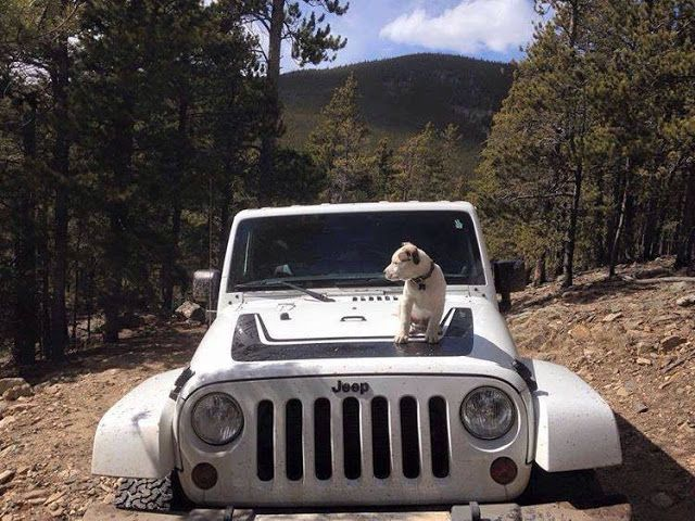 The Country Chrysler Blog: National Dog Day 2016 Country Chrysler High River
