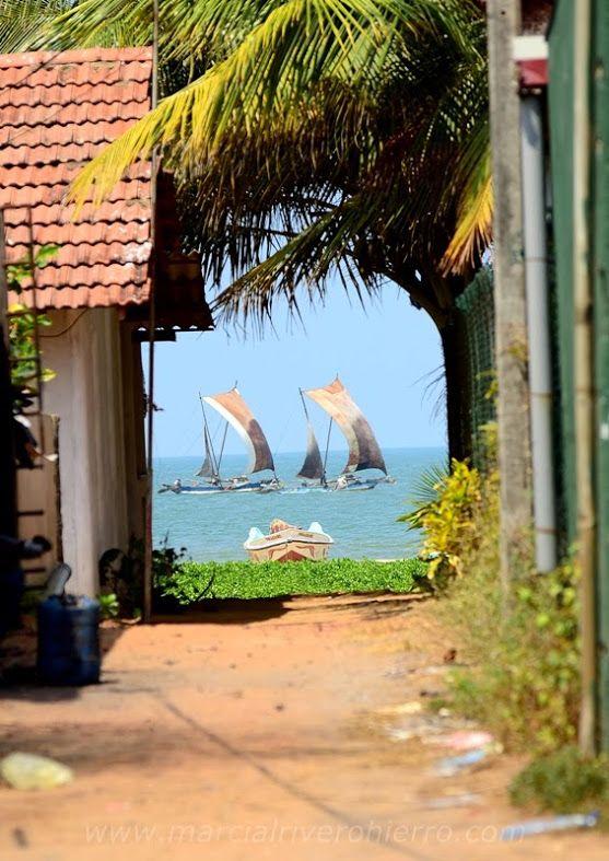 Negombo-  Sri Lanka