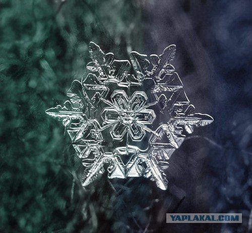 Снежинки под микроскопом