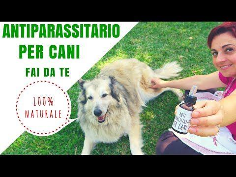 ANTIPARASSITARIO PER CANI 100% NATURALE FAI DA TE - YouTube