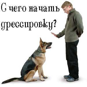 Дрессировка собак самостоятельно
