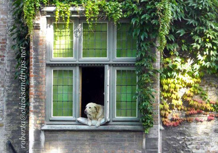 Il cane di Bruges http://www.chicksandtrips.net/?p=91