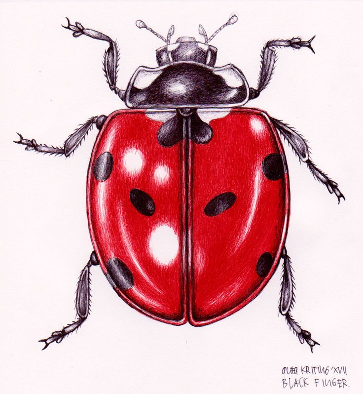 ladybug ballpoint drawing by black finger