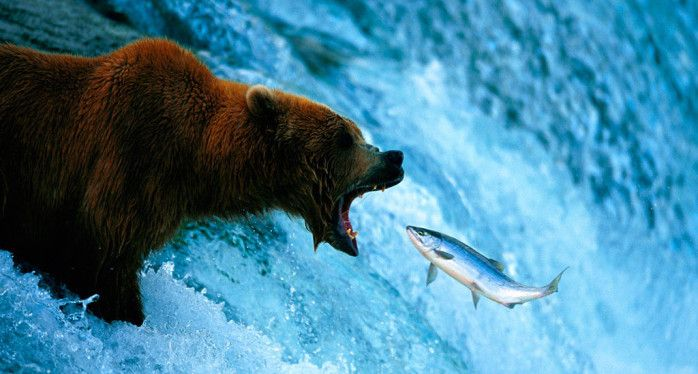 Swimming against the current may seem like the right move but eventually will be met with undeniable resistance. Be aware!