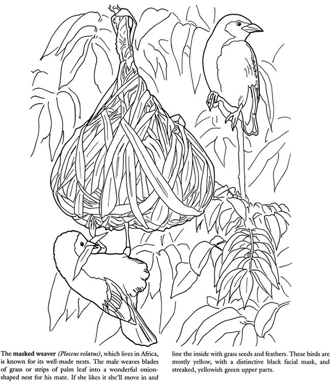 584 best Coloring pages to print Birds images on Pinterest