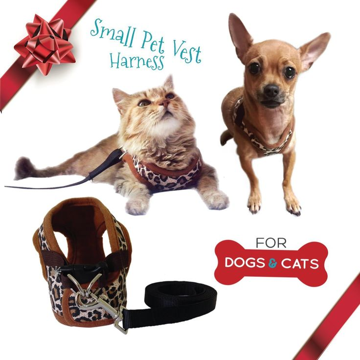 Cat Harness and Leash Set - Small Dog Vest Harness perfect for Cat or Dog Walking - Training – Escape proof Harness for Small Dogs - Choke Free harness to Prevent Injuries - Best Gift for your Pet -- Check this awesome product by going to the link at the image.