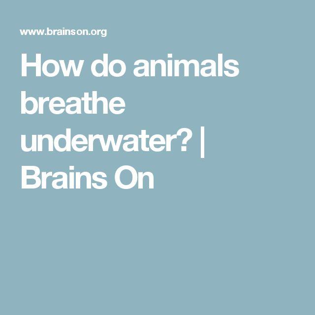 How do animals breathe underwater? |  Brains On