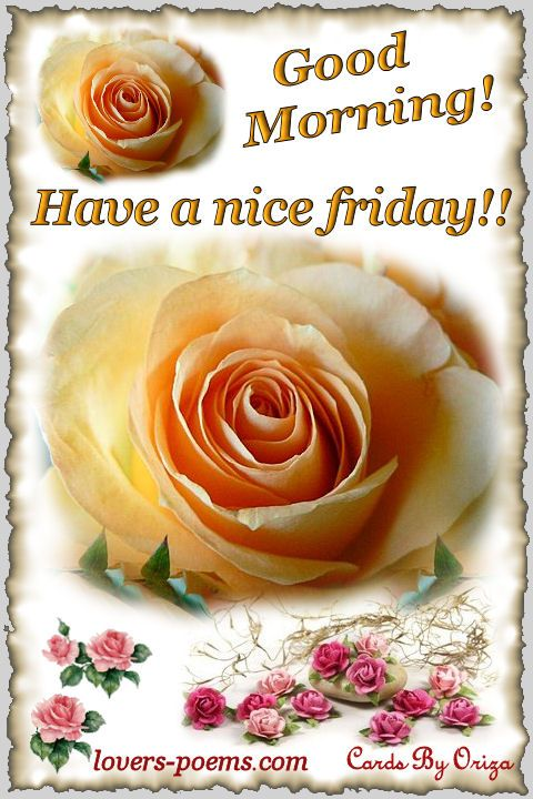Good Morning Amore : Good morning friday quotes google search lifetoshort