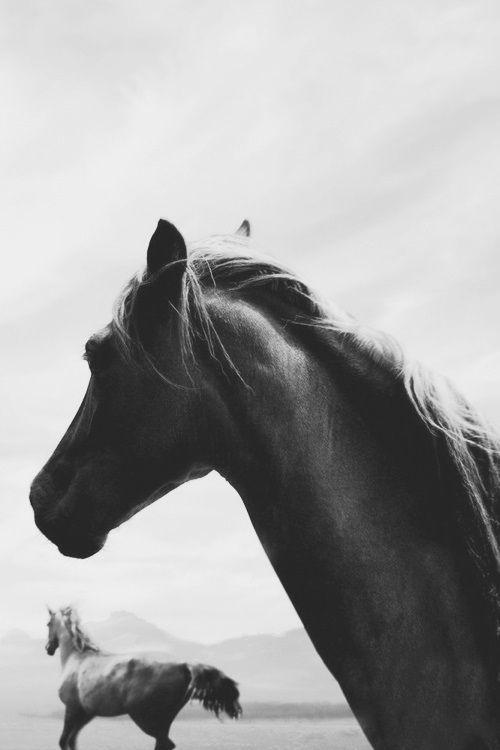 #Horse #Black&White #Photography