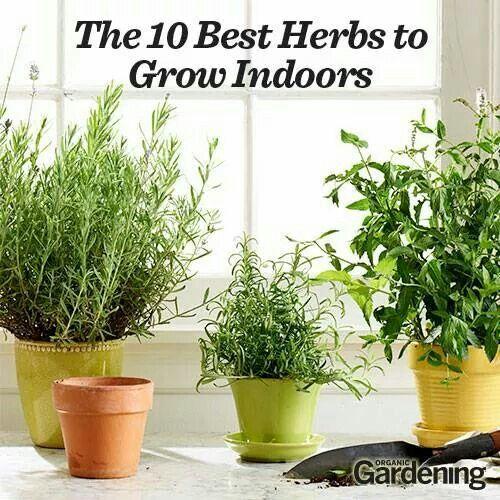 5 Best Herbs For Indoor Growing Gardening That I Love 400 x 300