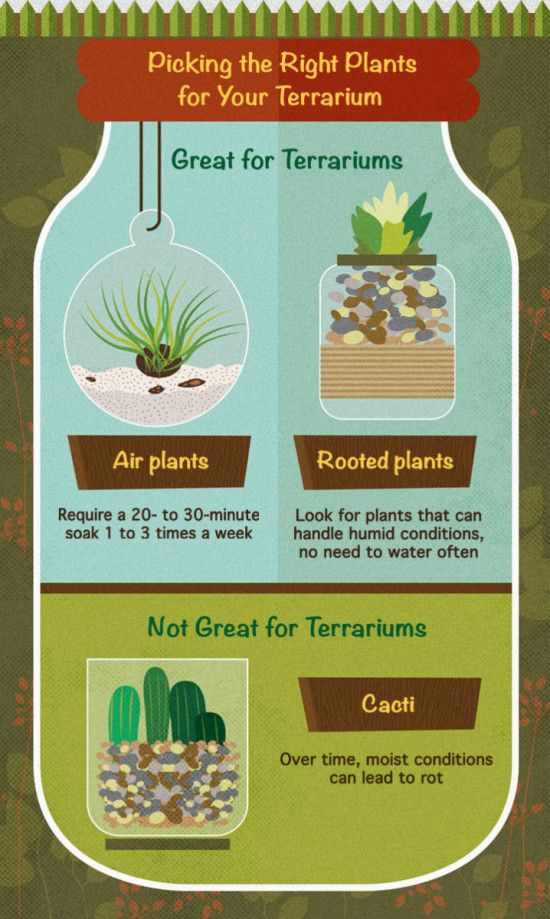 How to pick the right plants for your Terrarium